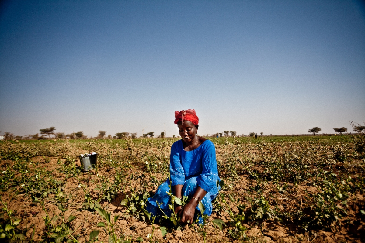 A woman tends to crops in Mauritania during the Sahel food crisis of 2012.  (Photo:Pablo Tosco/Oxfam International/flickr/cc)