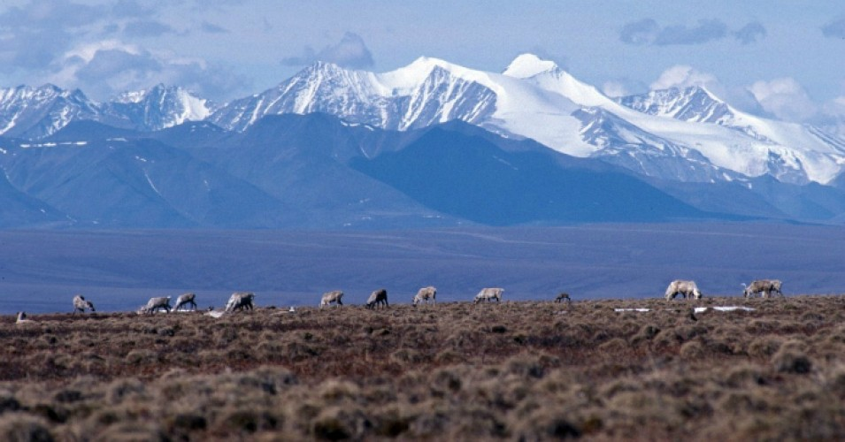 Ecological Importance and Human Rights Be Damned, Trump Admin Says Fossil Fuel Pillaging in Arctic Refuge Coming Soon