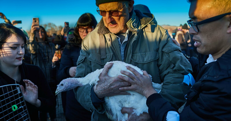 In Heartwarming 'Act of Thanksgiving Mercy,' Farmer Turns Over 100 Turkeys to Animal Rights Group