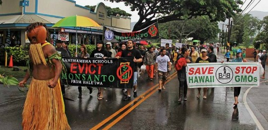 an overview of the positive effects of gmos in hawaii The debate around genetically modified organisms (gmo) is huge and heated on either side one of the major considerations when arguing against the use of gmo products is the potential for.
