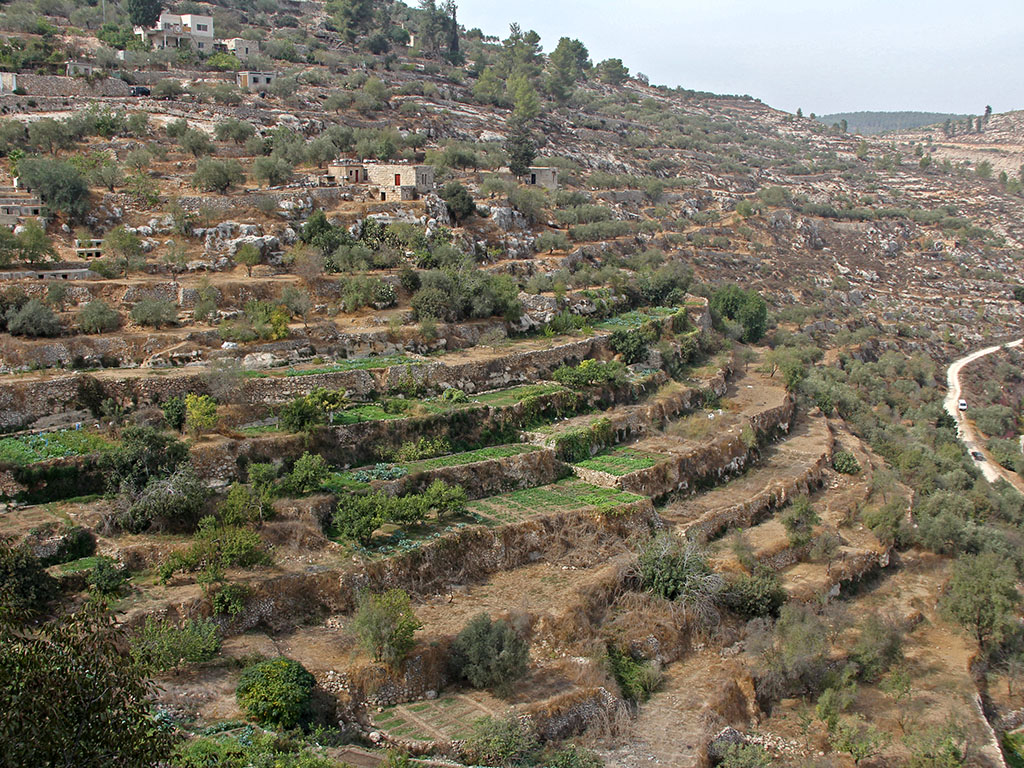 The land is our mother protecting the palestinian for What are terraces