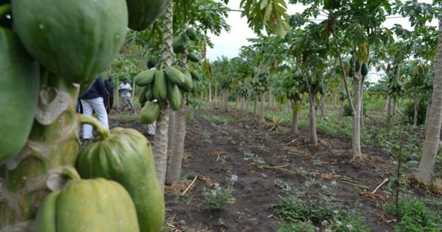 A Climate Smart Village in Western Kenya. Many African countries have pledged to invest in Climate Smart Agriculture as a way of mitigating climate change. Credit: Isaiah Esipisu/IPS