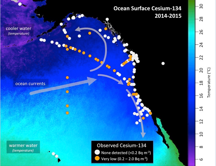 Map shows the location of seawater samples taken by scientists and citizen scientists that were analyzed at the Woods Hole Oceanographic Institution for radioactive cesium as part of Our Radioactive Ocean. Cesium-137 is found throughout the Pacific Ocean and was detectable in all samples collected, while cesium-134 (yellow/orange dots), an indicator of contamination from Fukushima, has been observed offshore and in select coastal areas. (Figure by Jessica Drysdale, Woods Hole Oceanographic Institution)