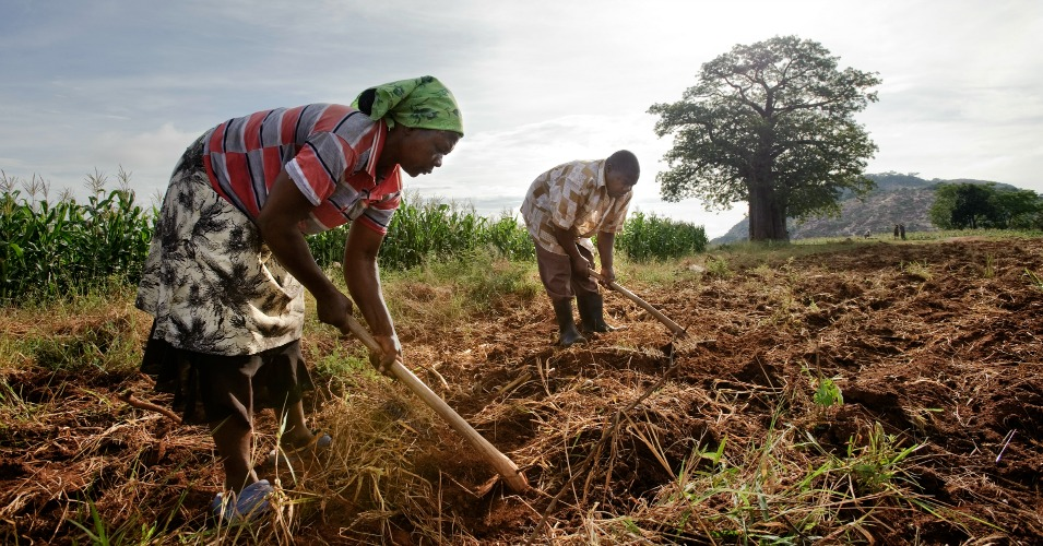 """Farmers in Zimbabwe prepare fields to grow corn. """"A hotter world is a more unequal world, with the north benefiting and tropical economies declining,"""" the Nature study authors say. """"A cooler world leads to more equitable global growth, offering regions like Africa the chance to 'catch up'."""" (Photo: David White, Oxfam)"""