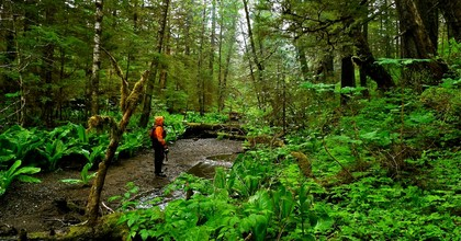 A proposal by the Trump administration would roll back protections of more than nine million acres of the Tongass National Forest in Alaska, opening up the area to the logging industry. (Photo: Joseph/Flickr/cc)