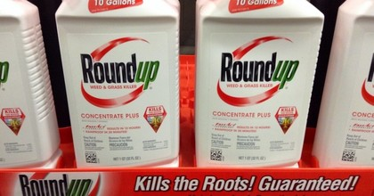 Glyphosate—designated a probable carcinogen by the WHO—is the active ingredient of Roundup, a weed killer produced by Monsanto, which merged with Germany's Bayer last year. (Photo: Mike Mozart/Flickr/cc)