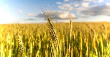 New research published in the journal Scientific Advances raises concerns about how droughts will impact the world's wheat production—and food security—in the coming decades. (Photo: Pixabay)