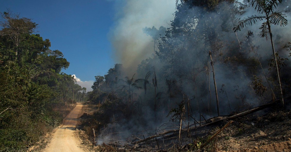 'Biggest Story in the World Right Now': Humanity Has Flipped Amazon From Carbon Sink to Source