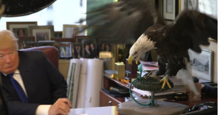 bad_eagle_trump-attacked-by-eagle1.jpg