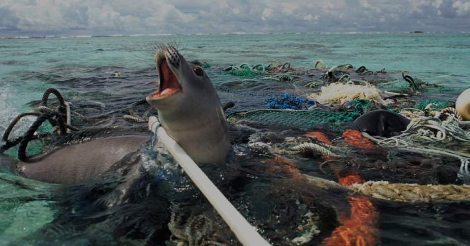 "A seal trapped in plastic pollution. Environmental advocates are concerned that a rise in plastics production will bring the world's oceans to a state of ""near-permanent"" pollution. (Photo: Nels Israelson/Flickr/cc)"