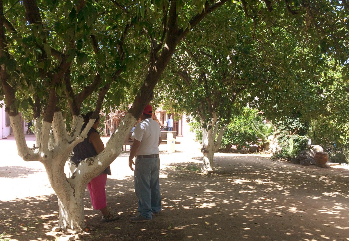 Guests commune under Valencia orange trees in the monastery's historic orchard. Until recently, the aging trees were tended by Benedictine nuns. (Photo: Rose Lambert-Sluder)