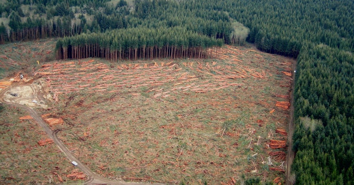 Clearcut forest. Photo: Sam Beebe (CC BY 2.0)