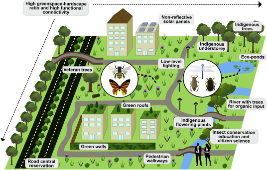 "Essential components for urban insect conservation. (From ""Solutions for humanity on how to conserve insects"")"