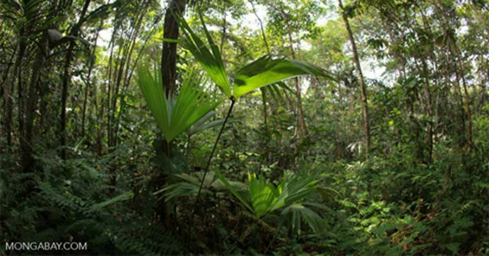 Analysts say the newly passed legislation could result in the loss of millions of acres of Amazon rainforest, as well as vast tracts in the Cerrado savanna. Photo by Rhett A. Butler / Mongabay