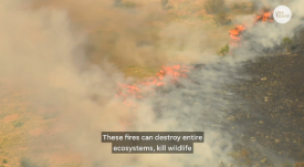 "USA Today's ""Just the FAQs"" video (8/20/19) on the Amazon fires—which promises to explain, ""How does this affect our planet?""—manages to avoid ever using the words ""climate"" or ""global warming."" (There is one reference to ""carbon and greenhouse gases,"" not further explained.)"