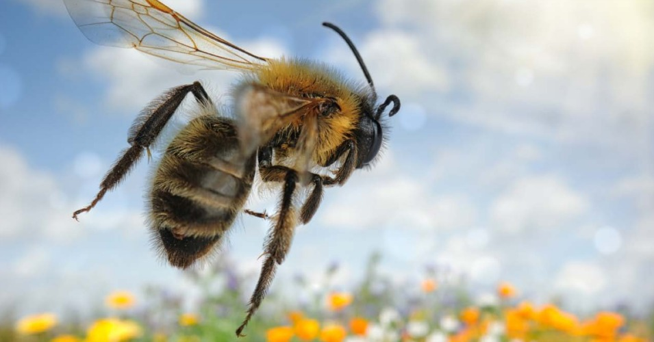 Why President Obama's Pollinator Strategy Won't Solve Bee Crisis