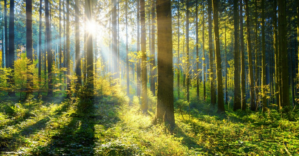Why Mother Nature Is the Key to Reforestation Planet Desperately Needs
