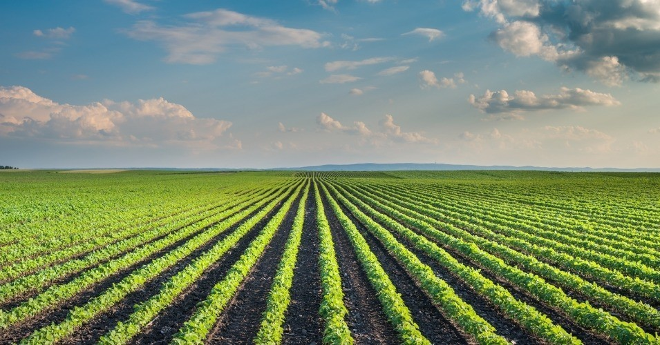 The Key to Saving Family Farms Is in the Soil