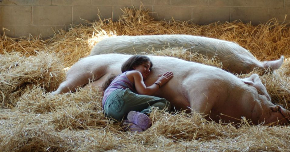 Farm Sanctuary A Haven From The Animal Holocaust By