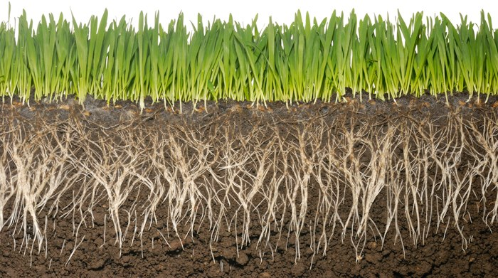 We are the soil common dreams breaking news views for Soil articles