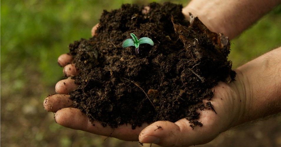 In living soil lies the solution to climate change for Is soil living